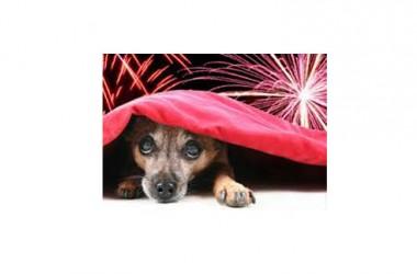 E.M.PA. & WWF – Petardi e fuochi d'artificio spaventano i nostri animali