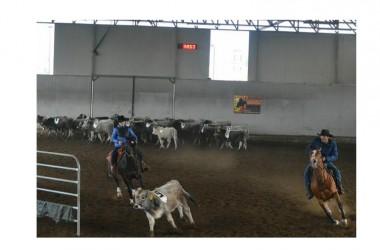 """Team Penning, Torneo Invernale """"La Fattoria&Sergio Reiners"""": conclusa la seconda tappa, si va verso il Campionato Regionale"""