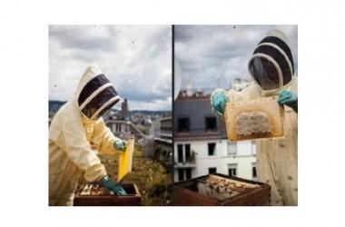 Apicoltori sui tetti. La nuova frontiera dell'alimentare fai da te: miele di città prodotto a casa a chilometro-zero
