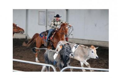 """Concluso il Torneo di Team Penning """"The Best Horse Sergio Reiners"""": imbattibile Di Cerbo"""