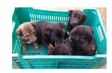 Ancora uno squallido episodio di maltrattamento animali, sei cagnolini abbandonati nelle gelide acque del fiume Sisto