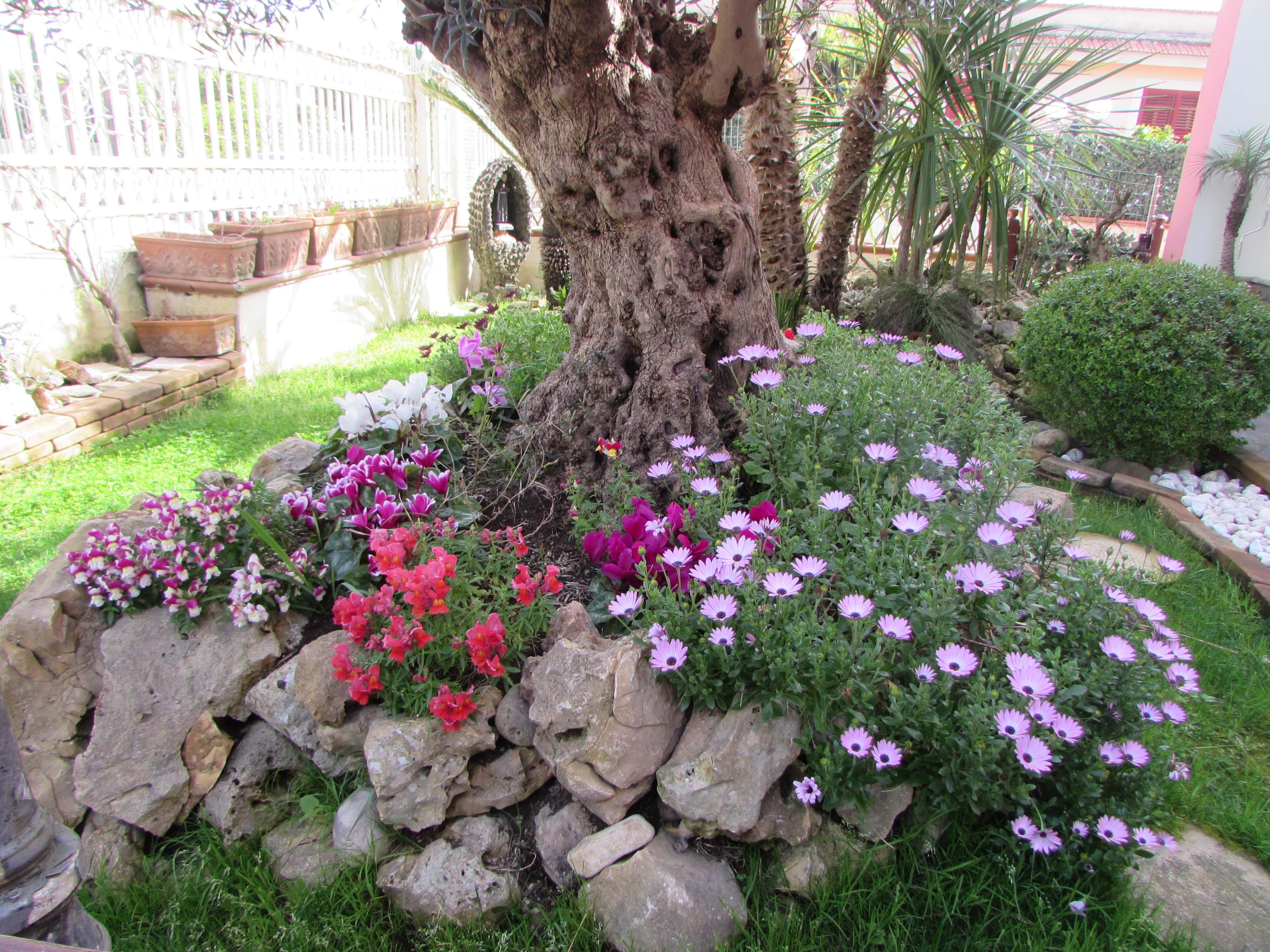 La primavera nel giardino di casa mia cancelloedarnonenews - Giardini di casa ...