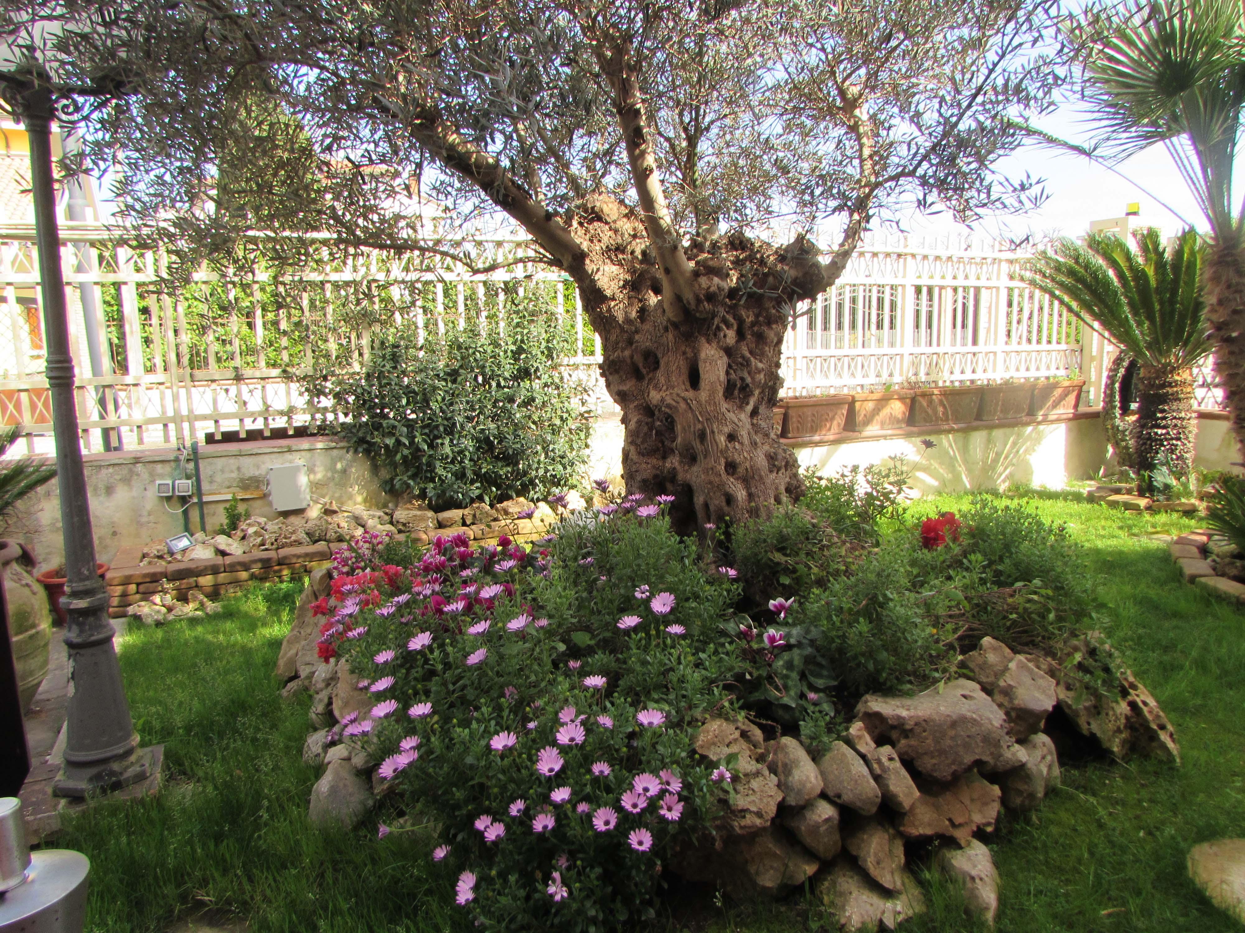 la primavera nel giardino di casa mia cancelloedarnonenews