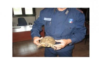 Immobile abusivo trasformato in un inferno per cani e altri animali: bliz a Somma Vesuviana (NA)