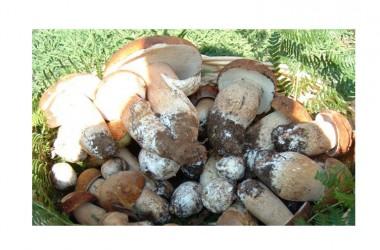 Qua i buongustai spuntano come funghi!  Sagra dei funghi a Cusano Mutri (BN)