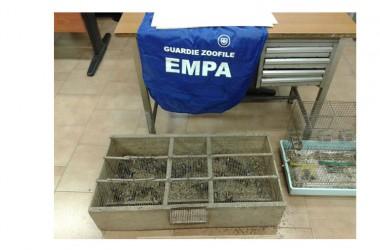 Carabinieri di Afragola (NA) e guardie zoofile EMPA denunciano persona per detenzione di Fauna protetta