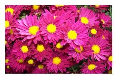 Le due giornate dell'1 e del 2 Novembre dedicate alla riflessione e alla preghiera. E un fiore per tutti!