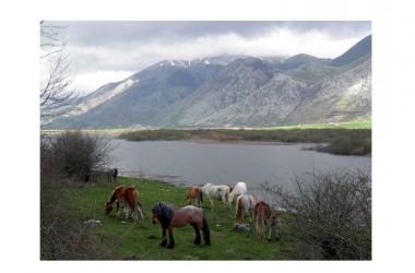 Il nuovo sito del Parco Regionale del Matese è on line
