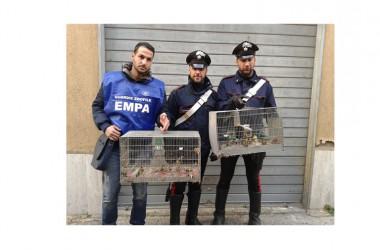 Napoli una persona denunciata per maltrattamento e detenzione di animali protetti operazione congiunta carabinieri E.M.P.A