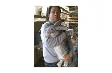 In Campania vive il coniglio più grande del mondo