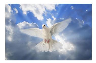Buona domenica e buona Pasqua di Resurrezione
