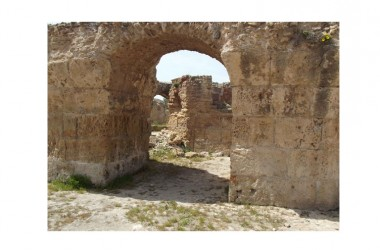 In  Tunisia sono fioriti i gelsomini