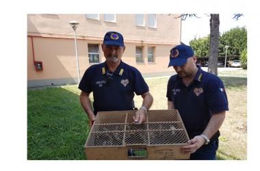 Carabinieri e Guardie ENPA denunciano una persona per detenzione animli protetti