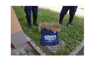 Vasta operazione Antibracconaggio da parte dell'E.N.P.A. e del Corpo Forestale dello Stato
