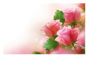 Happy Valentine's day a Tilde e Gianni