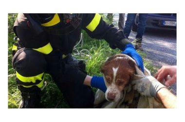 Il Codice della strada obbliga a soccorrere gli animali vittime d'incidenti