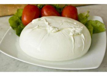 Mandara e Nuova Castelli, accordo per l'export di mozzarella in Usa e Nord Europa