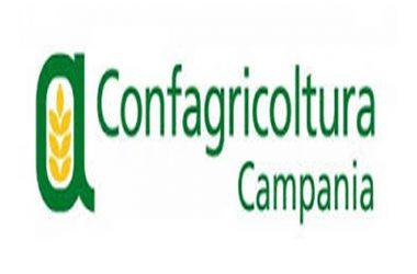 """Confagricoltura Campania su Bankitalia, """"Imprese agricole sempre più competitive crescono nell'export (+14,3%)"""""""