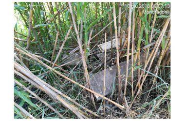 Mondragone :cumuli  di rifiuti  vari  e  materiali  contenente  amianto   illecitamente  abbandonati