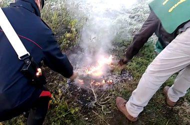 I Carabinieri Forestali e le Guardie LIPU sorprendono un albanese irregolare ad incendiare cassette di plastica a Marigliano.