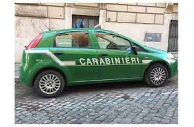 Carabinieri Forestali e Guardie LIPU denunciano tre persone per reati ambientali e furto di energia elettrica.