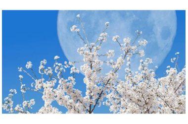 Equinozio 2019, quando è il primo giorno di primavera (orario e superluna)