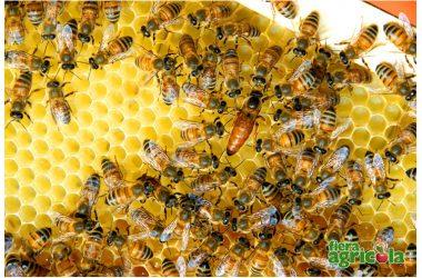 """""""L'Apicoltura dell'altro mondo"""", a Fiera Agricola con il divulgatore apistico Raffaele Dall'Olio si volerà in Nuova Zelanda e negli Stati Uniti"""