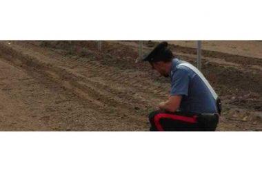Napoli, dramma nei campi di Varcaturo: lavoratore ucciso dal caldo mentre raccoglie meloni