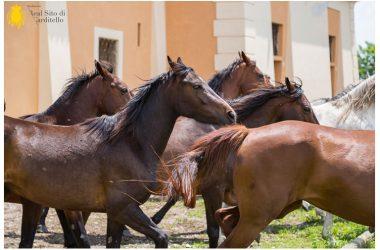 Carditello e i suoi cavalli in mostra a Verona