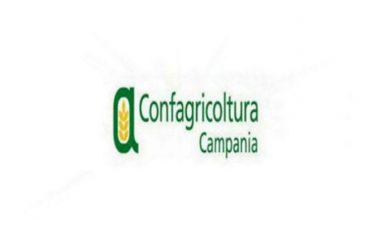 """Confagricoltura Campania: """"Il maltempo ha colpito in profondità l'agricoltura in tutto il territorio, Regione Campania attivi le procedure di stima dei danni"""""""