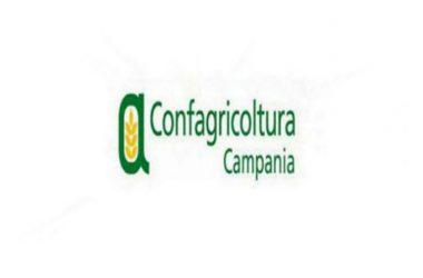 """Confagricoltura Campania: """"Psr Campania che raggiunge target di spesa,è  fatto positivo, ora massimo sforzo per fase finale e Psr 2021-2017"""""""