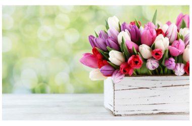 Buon Martedì con i giardini di marzo: i fiori da curare in questo mese