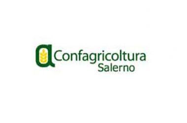 Confagricoltura Salerno, primi passi verso la sburocratizzazione della ricostruzione dei muretti a secco in Costa d'Amalfi