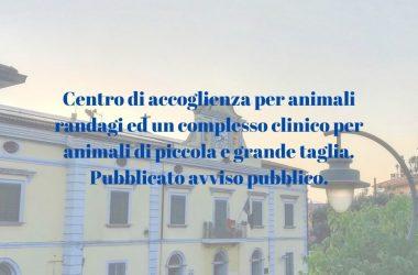 Cancello ed Arnone: centro di accoglienza per animali randagi ed un complesso clinico per animali di piccola e grande taglia. Pubblicato avviso pubblico.
