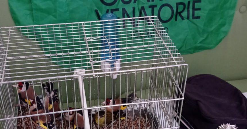 A.N., 32 anni, denunciato per detenzione di fauna protetta: 7 cardellini ed un lucherino sequestrati.