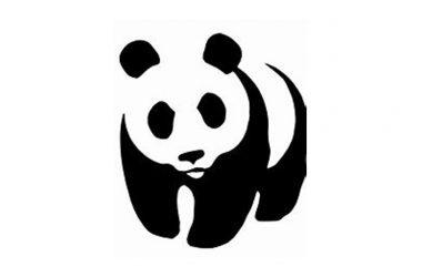 Lettera aperta al Sig. Sindaco di Caserta e ai Consiglieri Comunali : abbattimento pini via Unità Italiana e gestione del verde urbano
